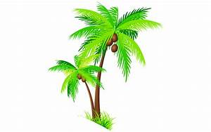 Coconut Tree Clipart At Free For
