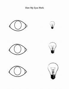 Free Blank Eye Diagram  Download Free Clip Art  Free Clip