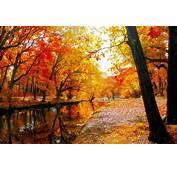 AUTUMN Fall Landscape Nature Tree Forest Leaf Leaves