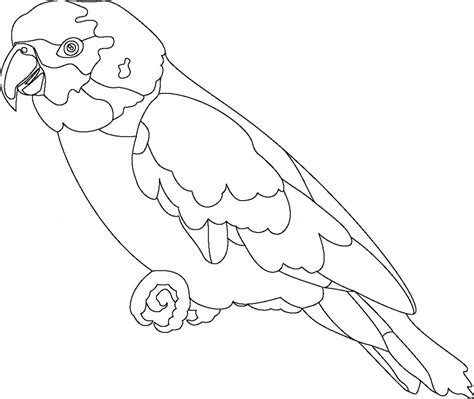 Coloring Outlines by Free Printable Parrot Coloring Pages For
