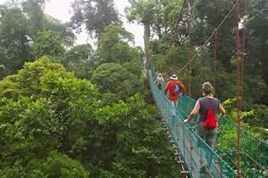 Jungle Trekking   Activities   Sabah, Malaysian Borneo