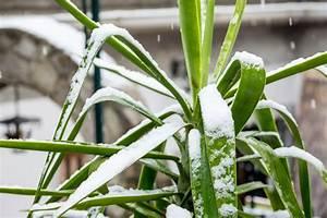Palmen Für Draußen : yucca palme drau en berwintern wann ist das m glich ~ Michelbontemps.com Haus und Dekorationen