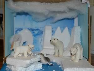 Continent Study  Antarctica Verses The Arctic