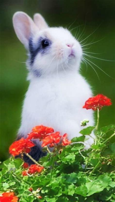 bunny rabbit ideas  pinterest