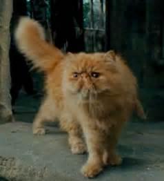harry potter cat crookshanks harry potter wiki