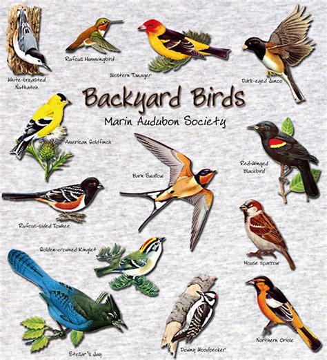 Birds in the Backyard – Ornithology