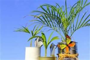 Welche Erde Für Palmen : welche palme habe ich so erkennen sie sie ~ Watch28wear.com Haus und Dekorationen