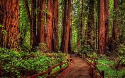 Backgrounds Path Wallpapers Redwood Forest Tree Woods