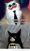Grumpy Cat  Scars