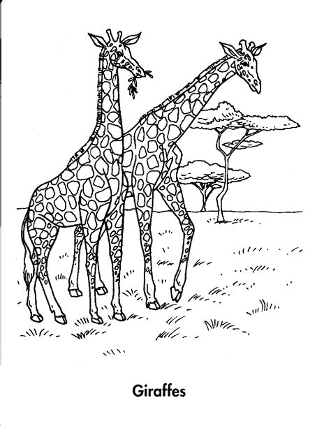 Rainforest Animals Coloring Pages by Rainforest Animals Coloring Pages
