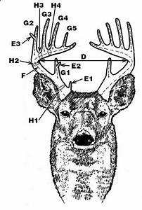 Deer Antler Scoring  Need To Learn This So  I Know What