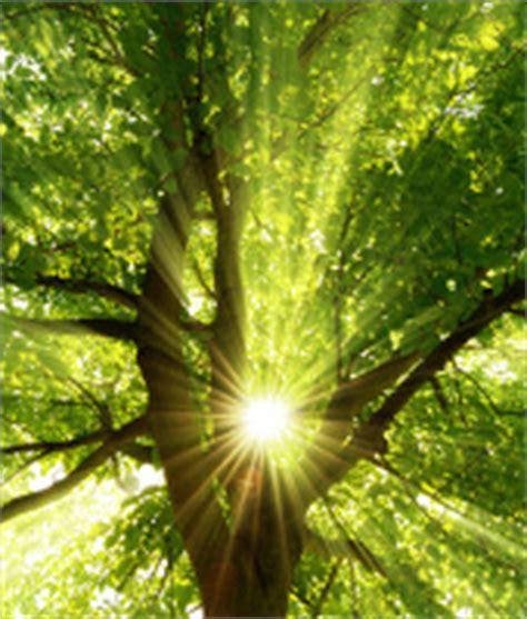 abiotischer umweltfaktor temperatur