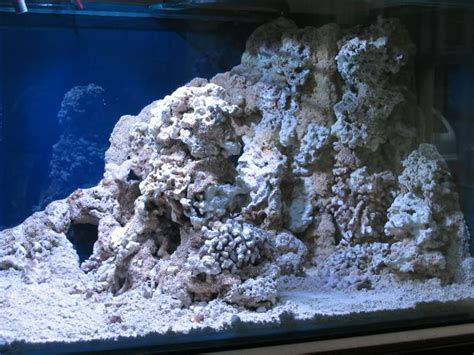 live rock aquascaping ideas 7 best images about live rock on warm