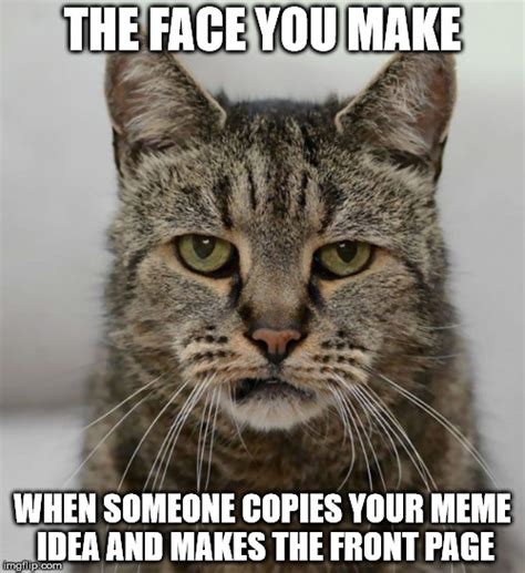 Make Your Meme - disappointment cat imgflip
