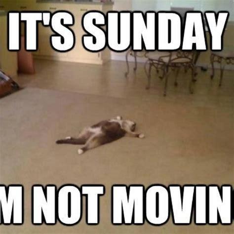 Sunday Meme - 17 best images about sunday on pinterest sunday night that awkward moment and bunny slippers