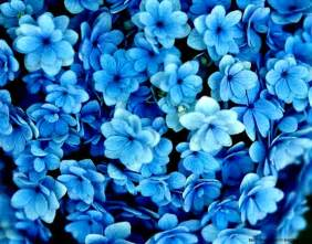 silk flower bouquets eletragesi blue flowers background images