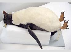 Penguin dead in the water? London Evening Standard