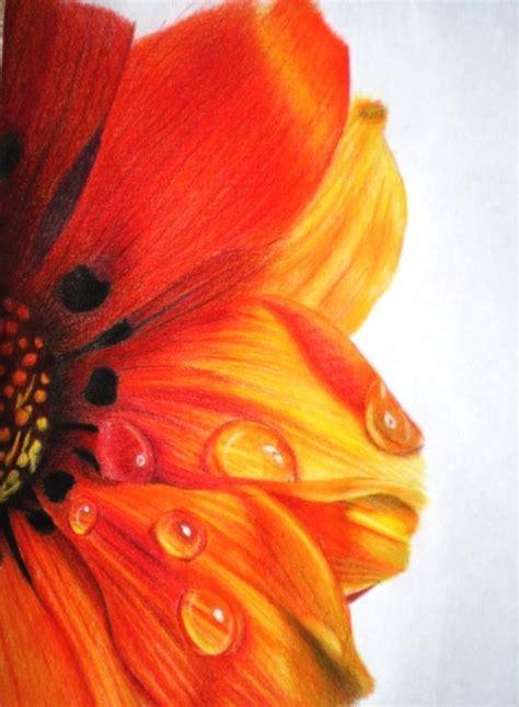 beautiful color pencil drawings great inspire