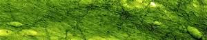 Algen Im Teich Hausmittel : anleitungen im bereich garten zum thema algen ~ Lizthompson.info Haus und Dekorationen