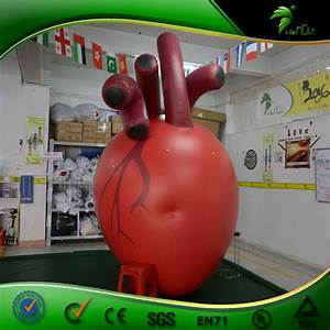 Custom Inflatable Vivid Human Red Real Heart   Inflatable