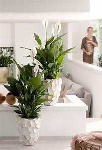 Blumen Für Fensterbank : einblatt ist zimmerpflanze des monats juni pflanzen pinterest pflanzen einblatt und garten ~ Markanthonyermac.com Haus und Dekorationen