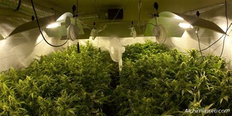 chambre de culture cannabis complete ventilation for marijuana grow rooms alchimia