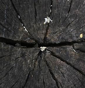 Tronc Bois Flotté : bois flotte vecteurs et photos gratuites ~ Dallasstarsshop.com Idées de Décoration