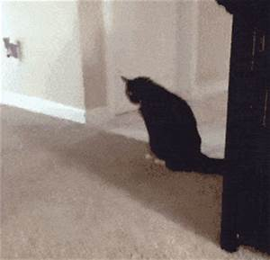 is the perfect gif even possible overthinking it With cat dragging bum on floor