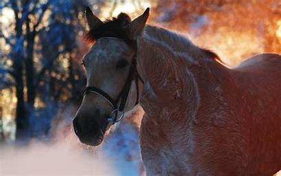 Horse Desktop Winter Backgrounds Computer Wallpapers Background