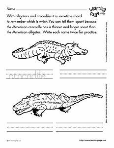 Distinguish Alligators From Crocodiles Worksheet For 1st