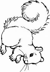 Squirrel Coloring Pages Clipart Squirrels Acorn Print Printable Colouring Animals Cliparts Clip Cute Baby Animal Nuts Cartoon Library Am Clipartpanda sketch template