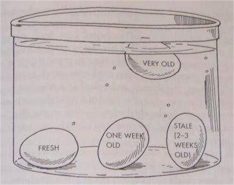 Eggs That Sink In Water by Egg Float Test