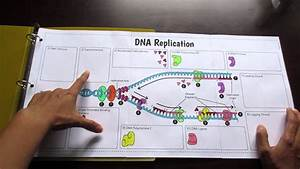 Big Dna Replication Foldable By Tangstar Science