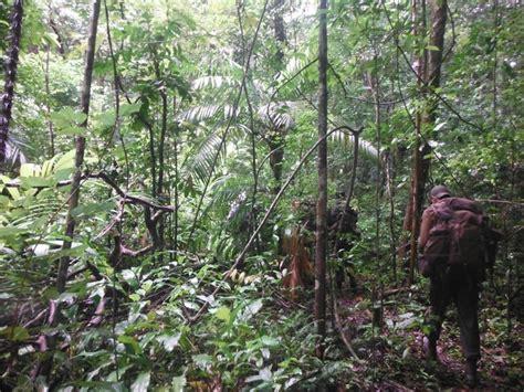 triple canopy rainforest  guyana expedition