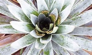 U98df U866b U690d U7269 U306e U30da U30fc U30b8 Hiroshi Wakabayashi U0026 39 S Carnivorous Plants Pages