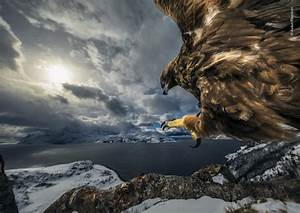 The best winning pictures from the 2019 Wildlife Photographer of the Year competition — and the ...