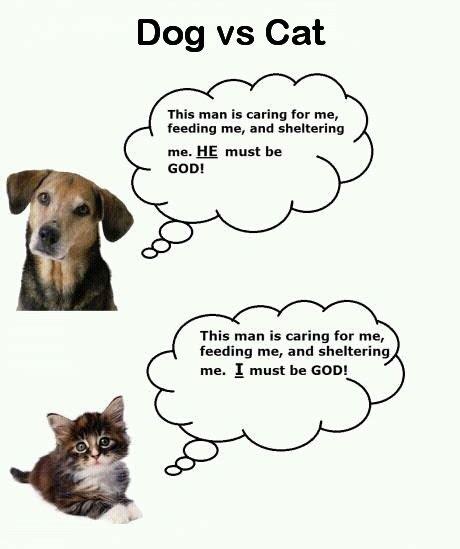 Dog Vs Cat Quotes Jokes And Cute Stuff Pinterest