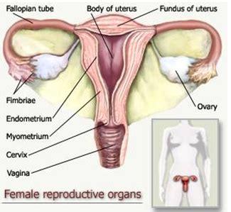 Rahim Wanita Jauh Obat Herbal Pembengkakan Rahim