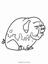 Pigs Coloring Pages Three Pig Drawing Story Getdrawings Printable sketch template