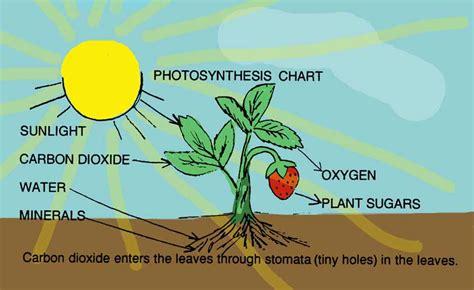 p   photosynthesis
