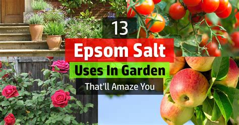 salt ls and plants 13 epsom salt uses in garden that 39 ll amaze you balcony