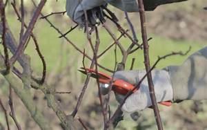 Comment Tailler Les Rosiers : comment tailler les rosiers ce qu il faut faire ~ Nature-et-papiers.com Idées de Décoration