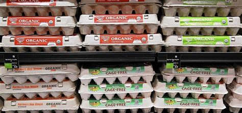 chicken coop ideas organic cage free the egg