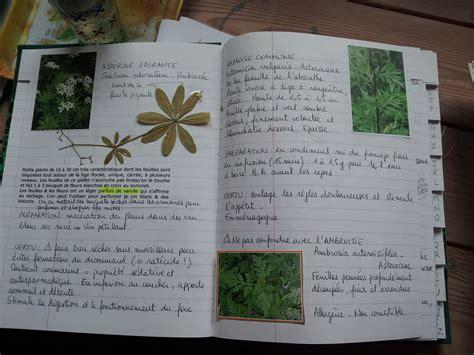 cuisine des plantes sauvages outil de cueillette des plantes sauvages comestibles