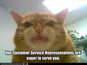how to get a service cat meowy inspirational service customer service