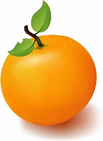 Orange Clipart Mandarin Fruit Vector Oranges Ai