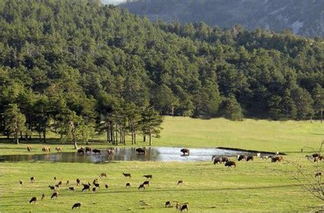 reserve biologique des monts d azur ecolodges picture of reserve biologique des monts d azur thorenc tripadvisor