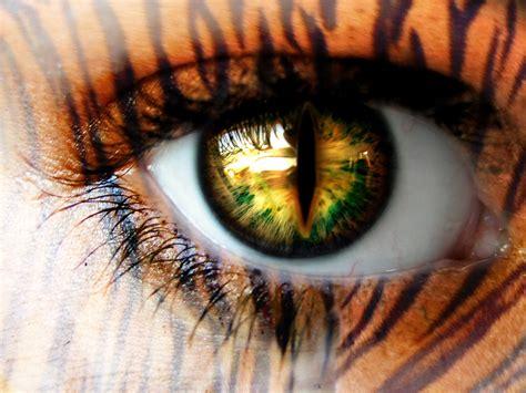 tiger eye sia mckye over coffee monday musings tiger s eye
