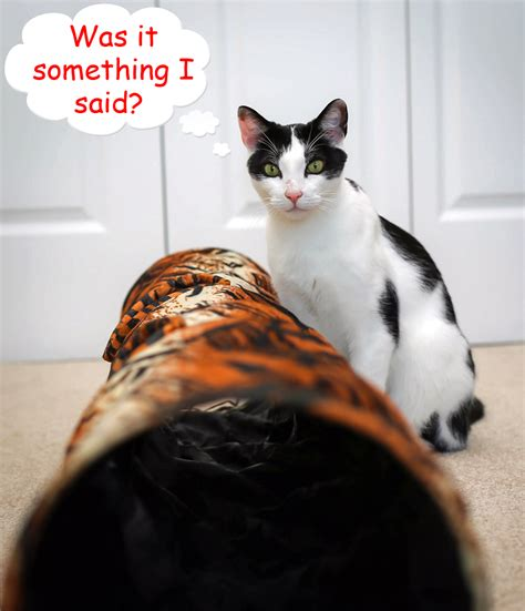 Daisy takes a spin in the Cat Crinkle Tunnel - PetMeds ...