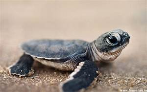 Cute Turtle Wallpapers - Wallpaper Cave